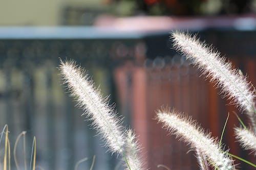 Foto d'estoc gratuïta de fauna, herba, herba seca, kolos