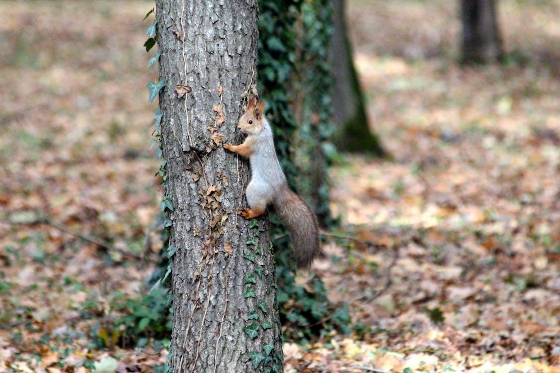 가을, 공원, 나무
