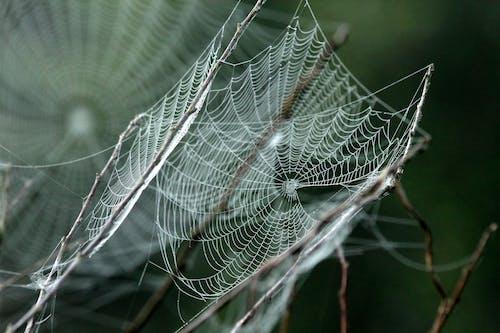 거미류, 거미줄, 덫, 망의 무료 스톡 사진