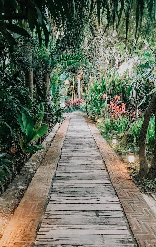 Kostenloses Stock Foto zu bali, blumengarten, fußpfad, fußweg