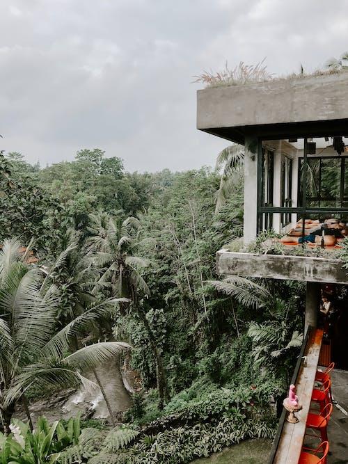 Kostenloses Stock Foto zu architektur, bali, bäume, dunkelgrüne pflanzen