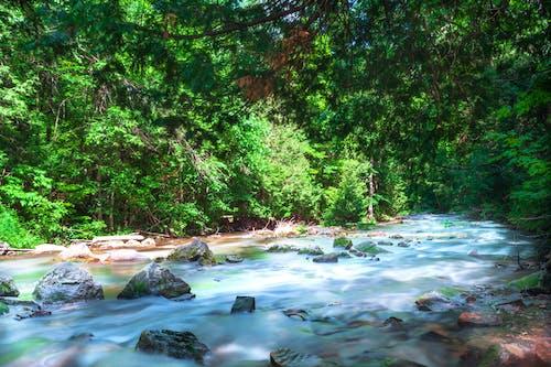 Foto d'estoc gratuïta de a l'aire lliure, aigua neta, amant de la natura, amor a la natura