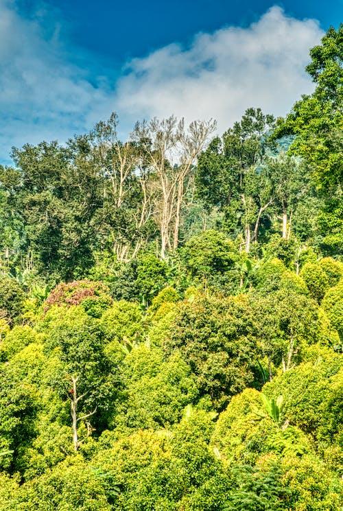 คลังภาพถ่ายฟรี ของ ต้นไม้, ธรรมชาติ, ป่า, ภูมิทัศน์
