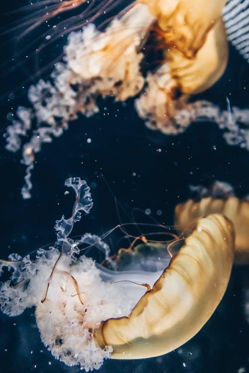動物, 水下, 水母