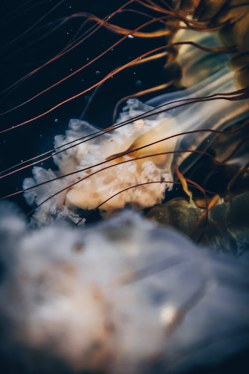 medúza, príroda, zviera
