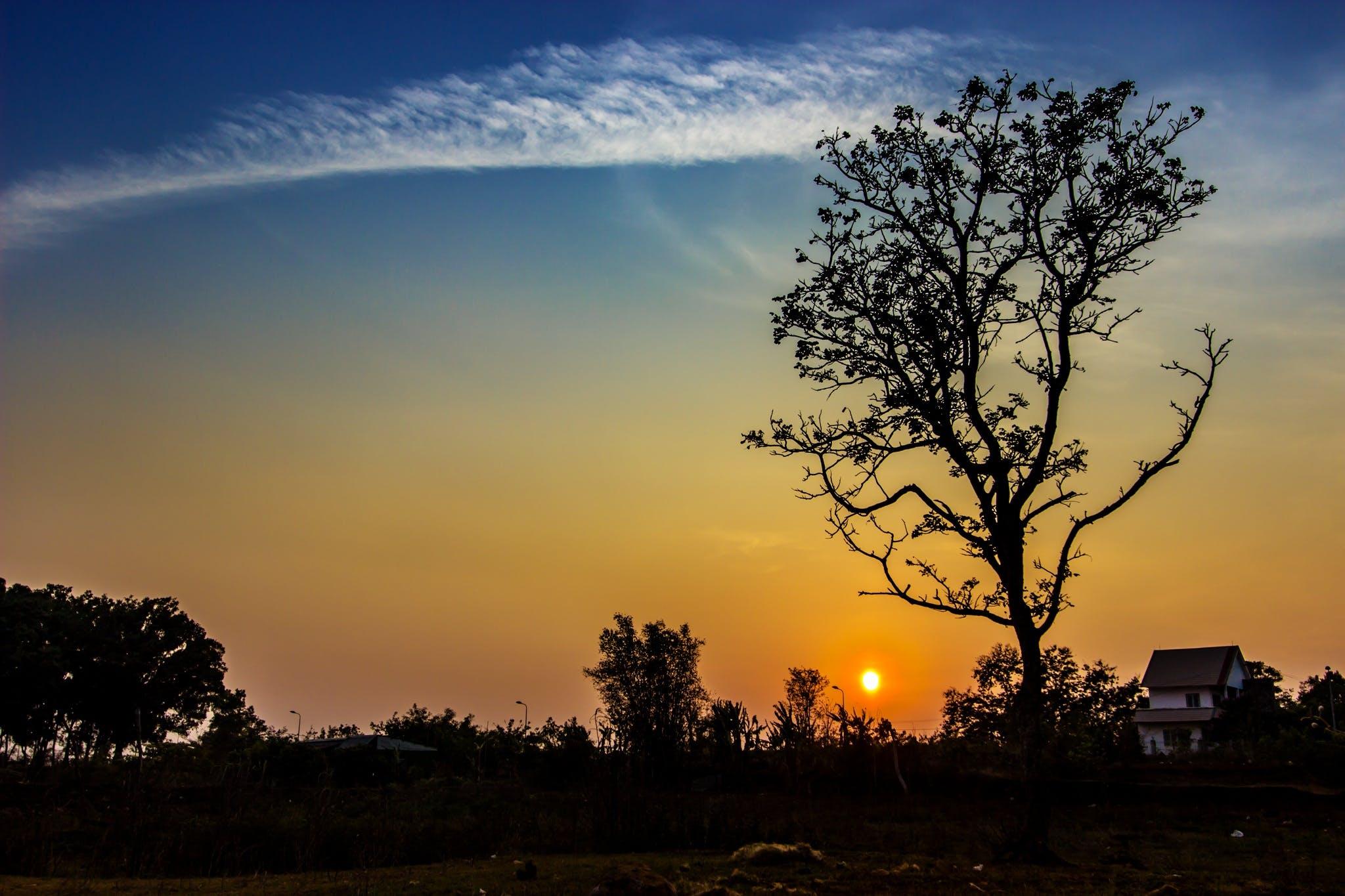 Gratis stockfoto met achtergrondlicht, avond, bomen, bossen