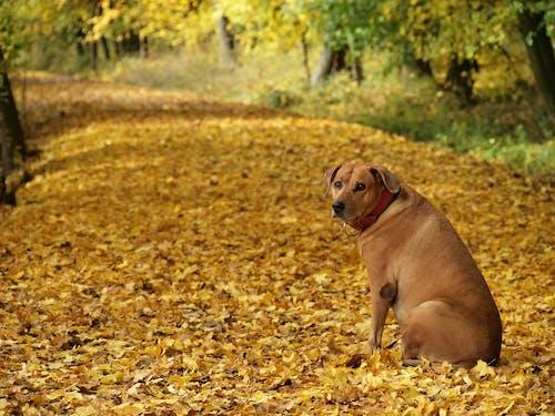 Free stock photo of animal, animal kingdom, autumn