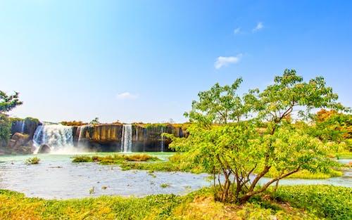 木, 水, 滝, 絶景の無料の写真素材