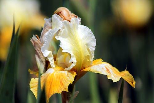 Foto d'estoc gratuïta de assolellat, blanc, bonic, botànica