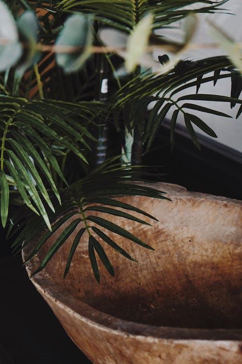 야자나무 잎, 인테리어의 무료 스톡 사진