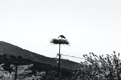 Immagine gratuita di animali, animali selvatici, birdwatching, casetta per uccelli