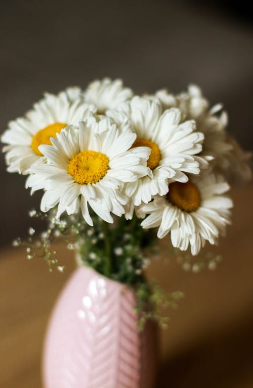 Free stock photo of bouquet, daisies, flower vase, flowers