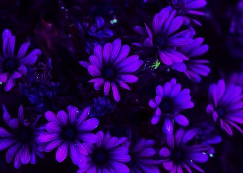 Gratis lagerfoto af blomster, smuk blomst