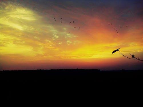 Fotobanka sbezplatnými fotkami na tému obloha, večer, vtáky, západ slnka