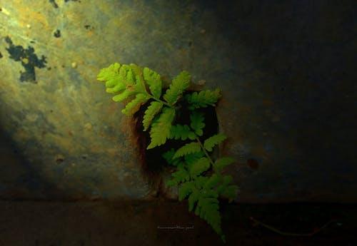 Fotobanka sbezplatnými fotkami na tému ľahký, rastlina, slnečné svetlo, zelená