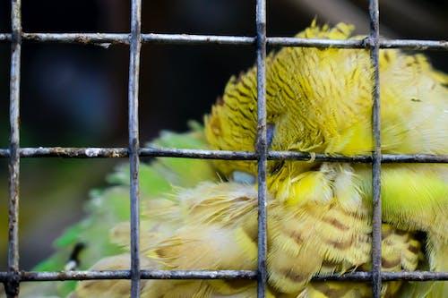 Foto profissional grátis de ave, fotografia animal, fotografia ao ar livre, gaiola