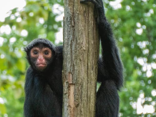 Photos gratuites de amoureux des animaux de compagnie, animal, animaux, parc animalier
