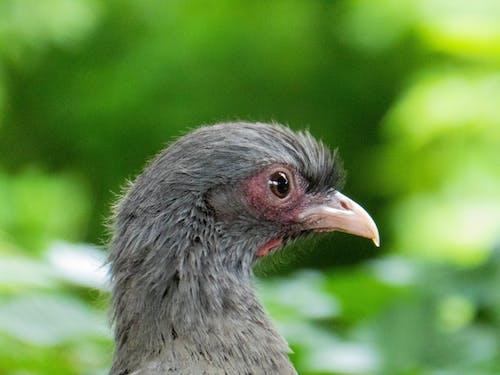 Foto stok gratis binatang, burung, burung-burung, fotografi binatang