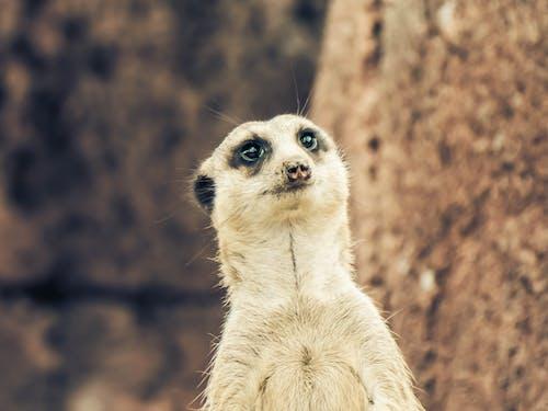 Photos gratuites de amoureux des animaux de compagnie, animal, animaux, animaux mignons