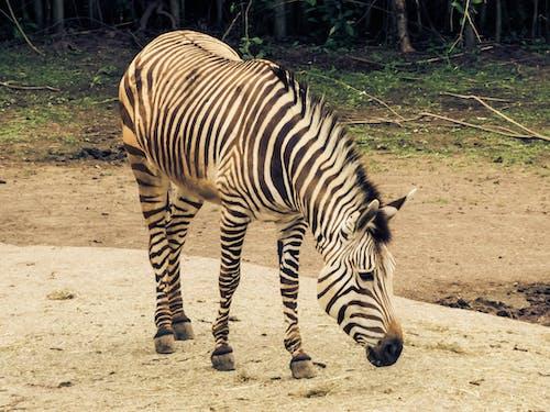 Foto stok gratis binatang, binatang imut, fotografi binatang, kebun binatang