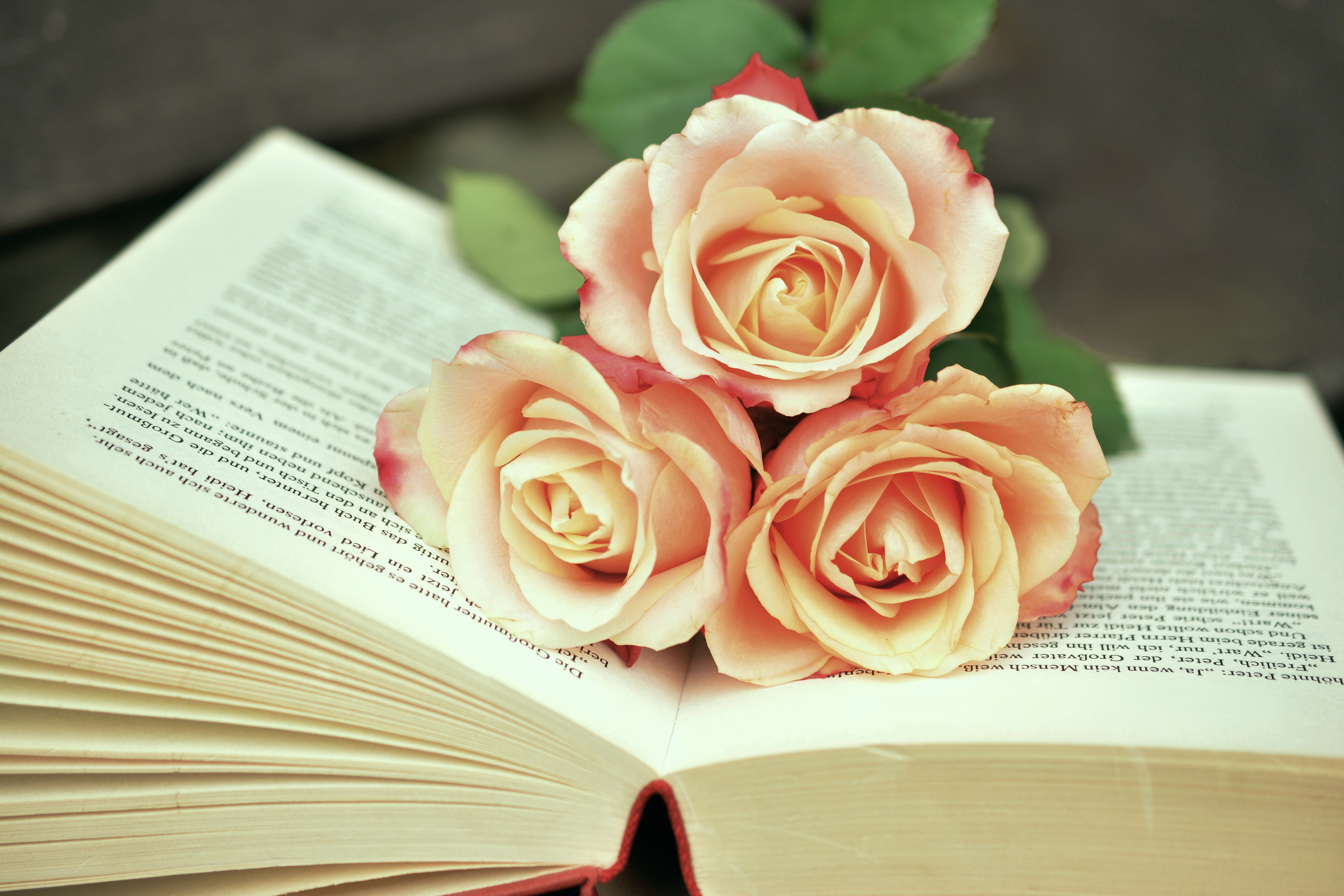 Three Pink Rose Flowers on Opened Book