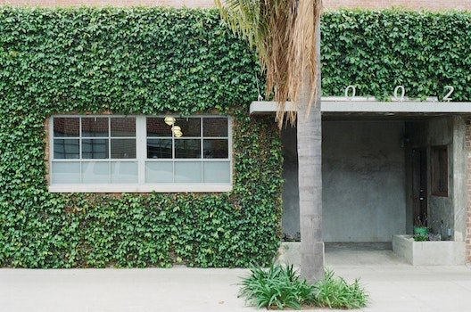 Free stock photo of building, house, overgrown