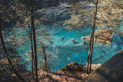 açık hava, ağaçlar, göl, isviçre içeren Ücretsiz stok fotoğraf