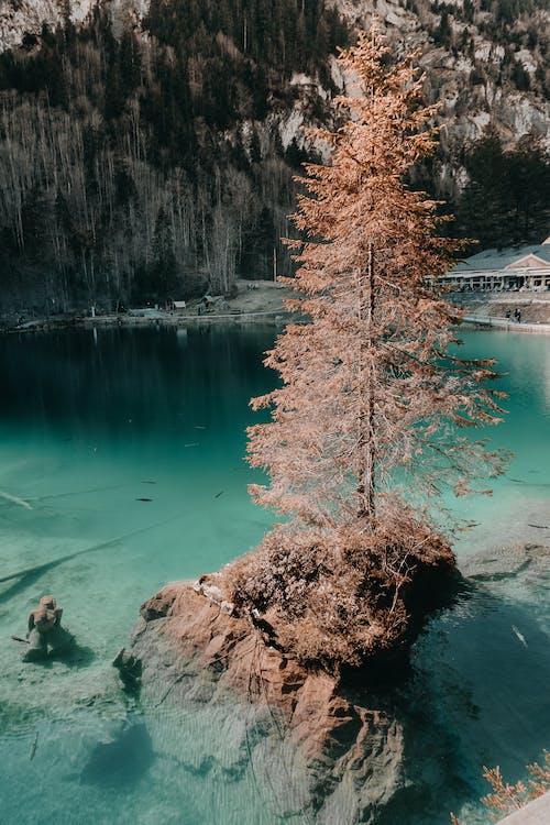 açık hava, ağaç, doğa, göl içeren Ücretsiz stok fotoğraf