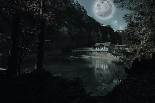 Foto d'estoc gratuïta de Alps suïssos, arbre, aterratge de la lluna, atracció turística