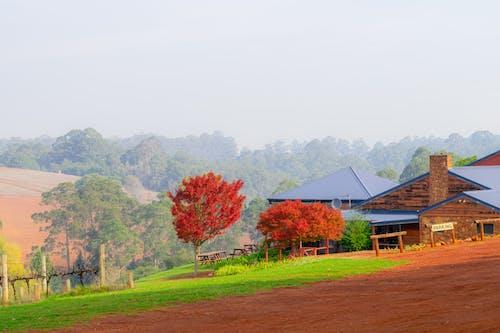 Kostnadsfri bild av böljande kullar, dimmigt landskap, fredlig, grus