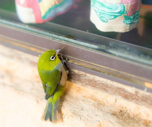Kostnadsfri bild av fågel, fönsterbrädan, gardiner, grov vägg
