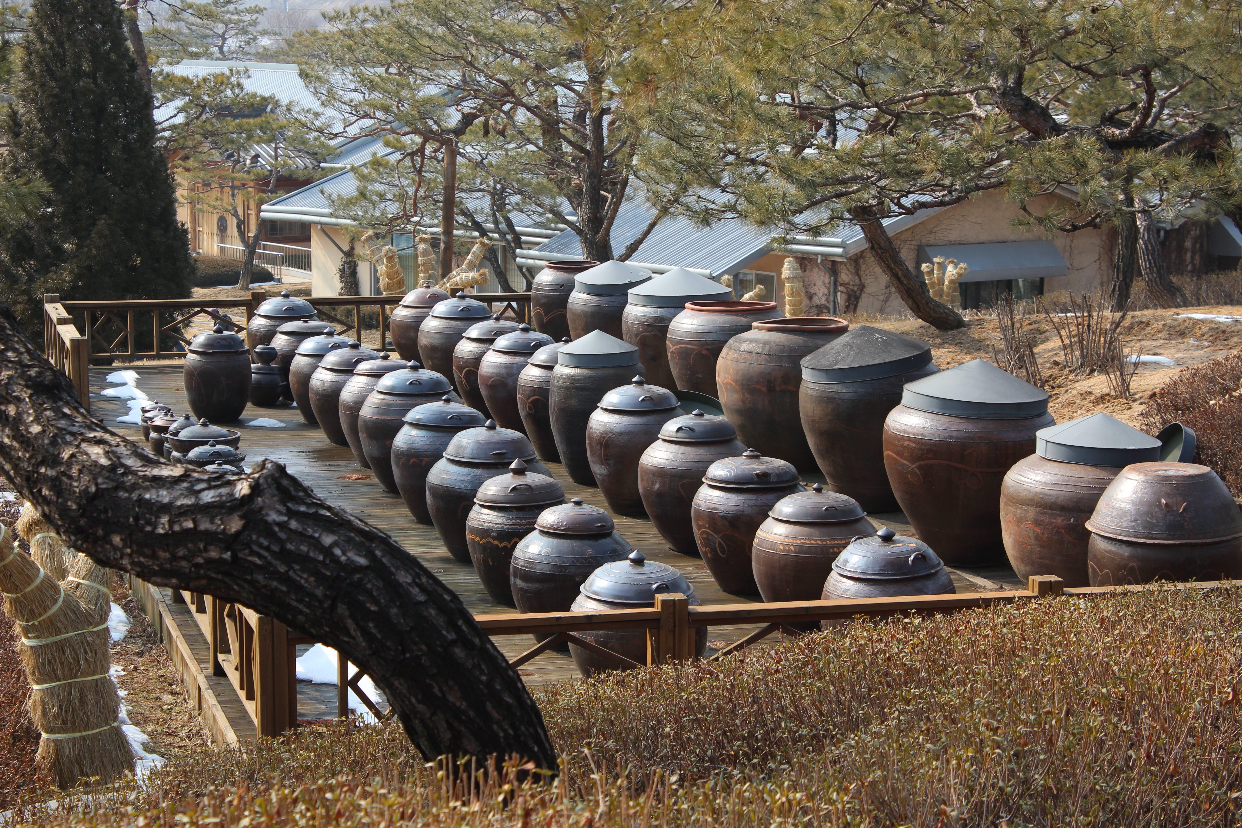 Free stock photo of storage, jar, republic of korea, chapter reading