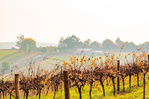 Kostnadsfri bild av dimmigt landskap, eucalypt träd, höstlöv, inlägg