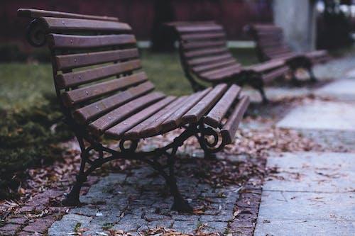 Fotos de stock gratuitas de asientos, bancos, hojas secas, parque
