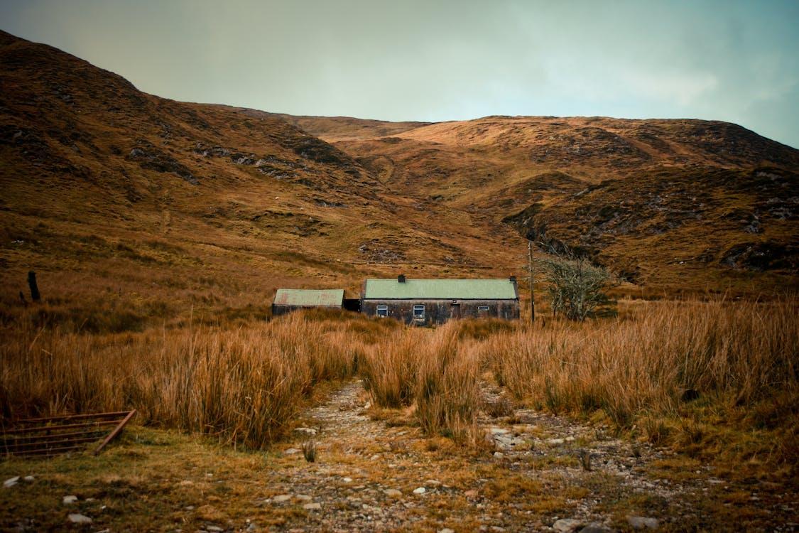 дикий, дом, ирландия