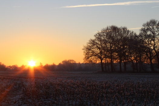 Free stock photo of dawn, sky, sunset, trees