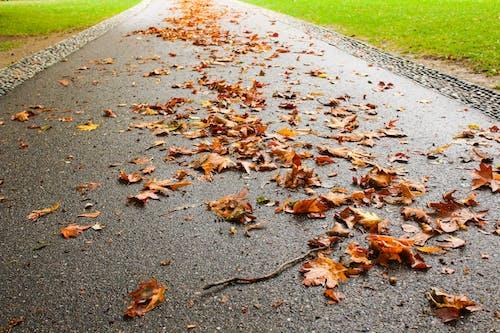 Foto d'estoc gratuïta de carretera, fulles, fulles caigudes, fulles de tardor