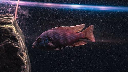 Free stock photo of dark, fish, lights