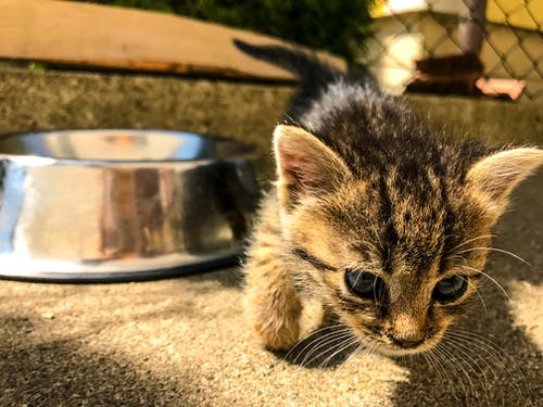 Free stock photo of cat, cats, little baby
