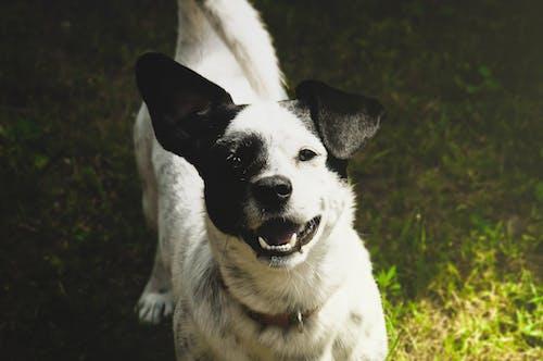 Ảnh lưu trữ miễn phí về chó, cỏ, mặt trời, vui mừng