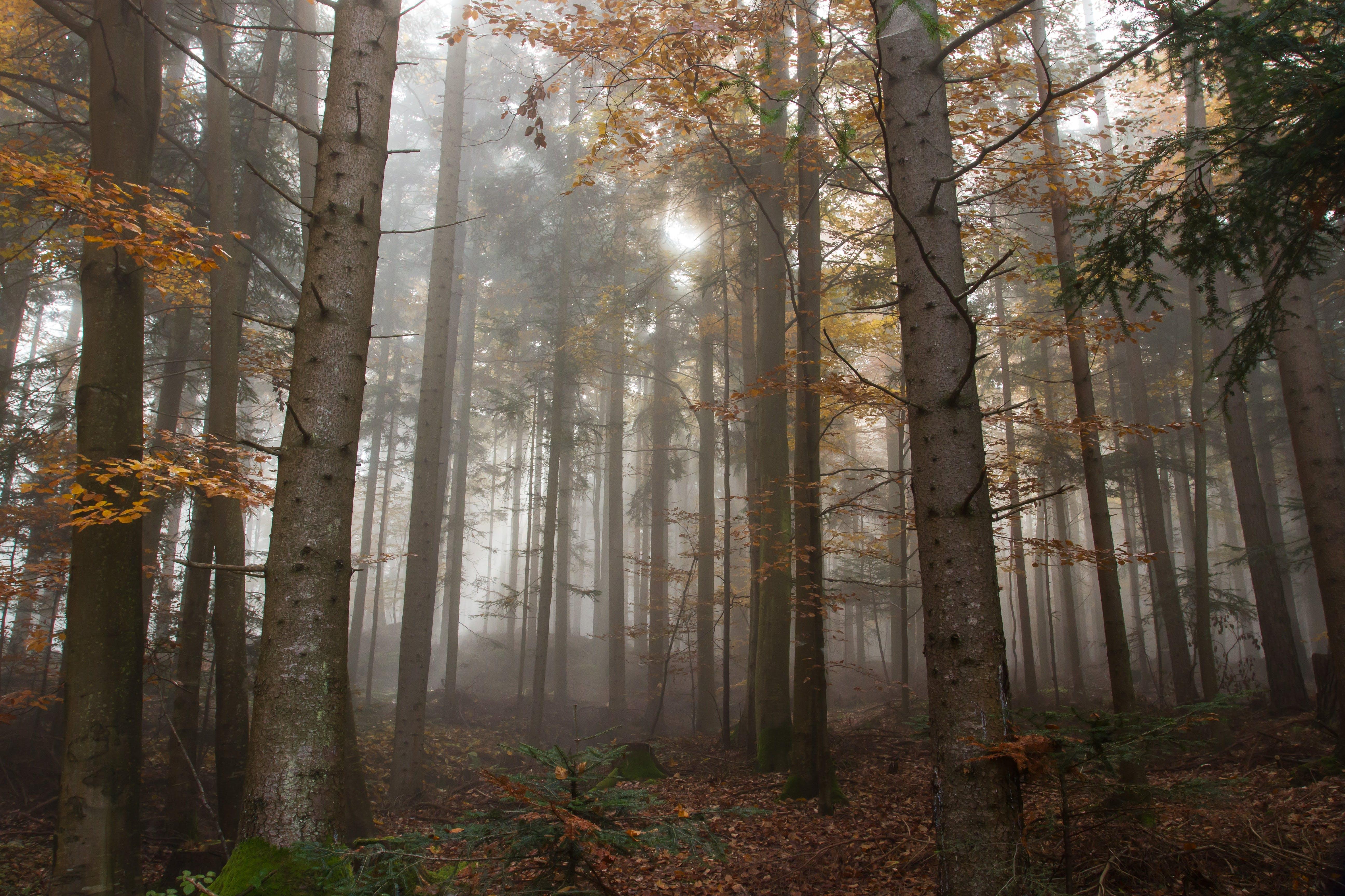 atmosphere, autumn, beautiful