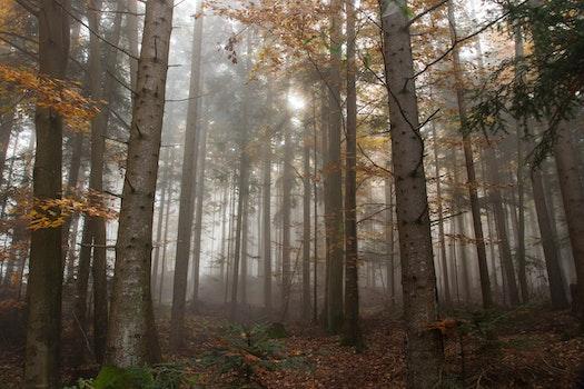 Kostenloses Stock Foto zu holz, licht, dämmerung, landschaft