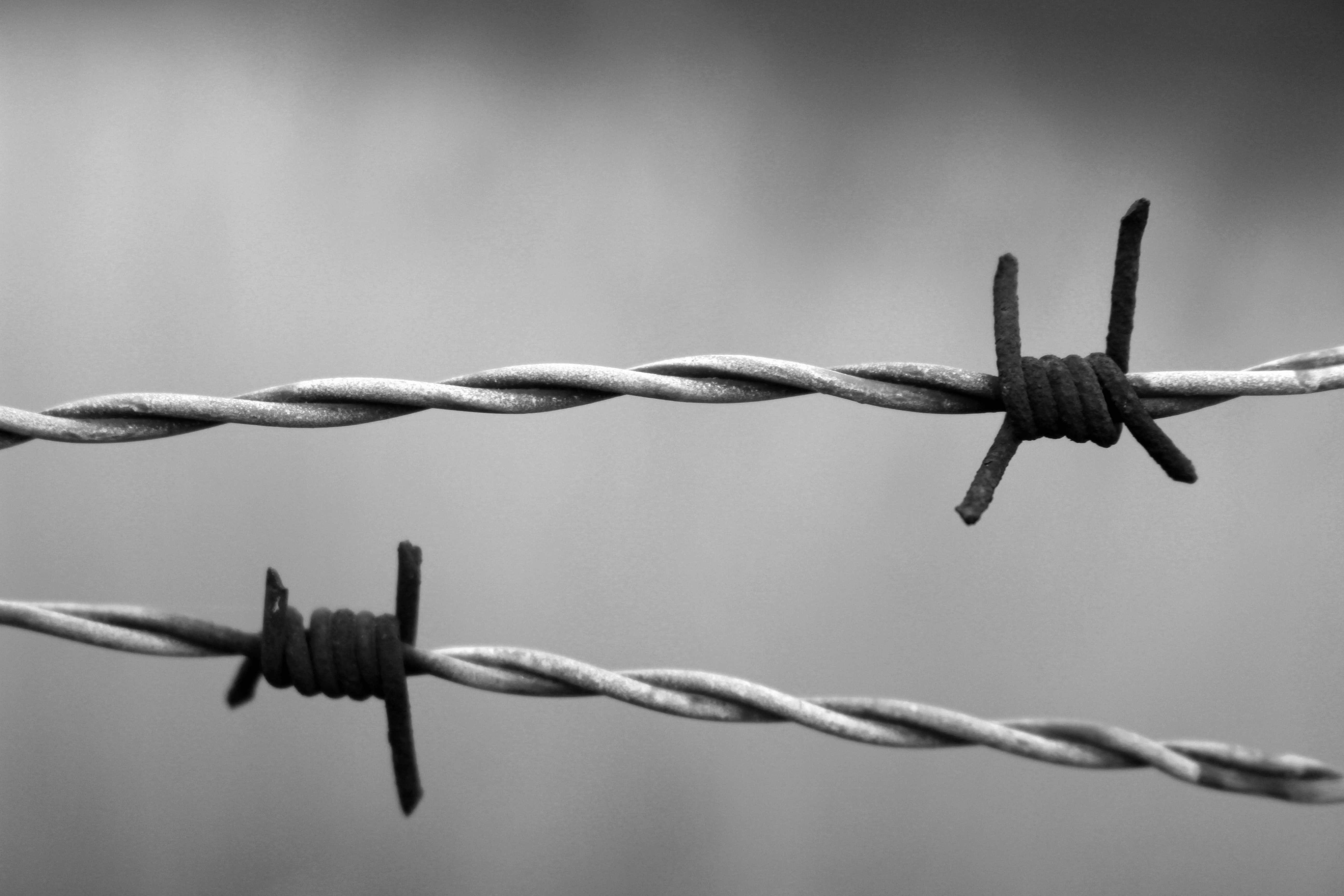 Free stock photo of abandonment, auschwitz, barbed wire