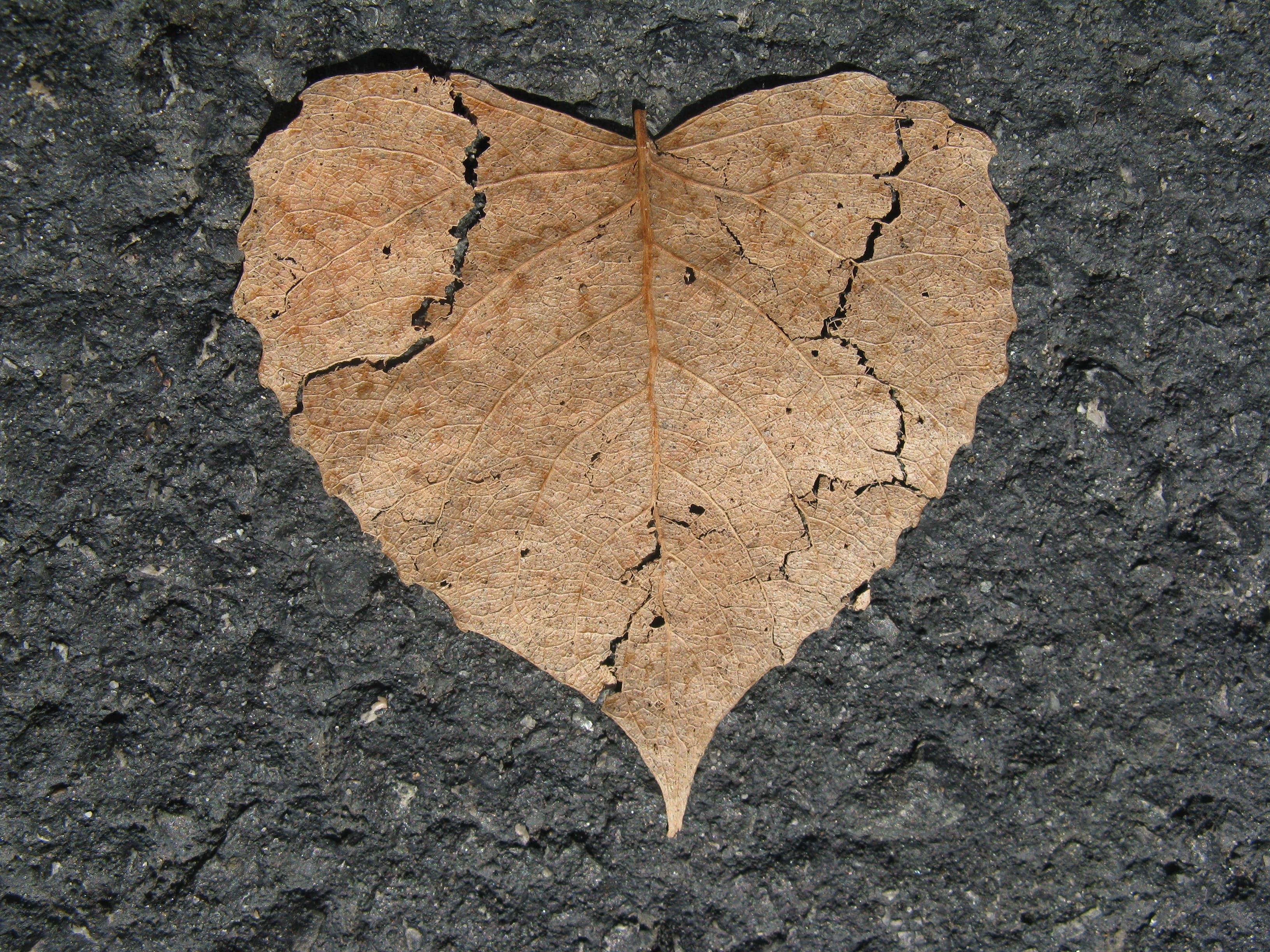 Free stock photo of asphalt, autumn, break, broken
