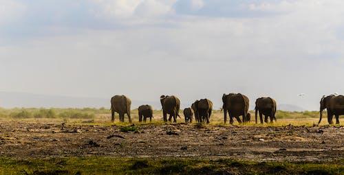 Fotos de stock gratuitas de al aire libre, animal, animal salvaje, campo de hierba
