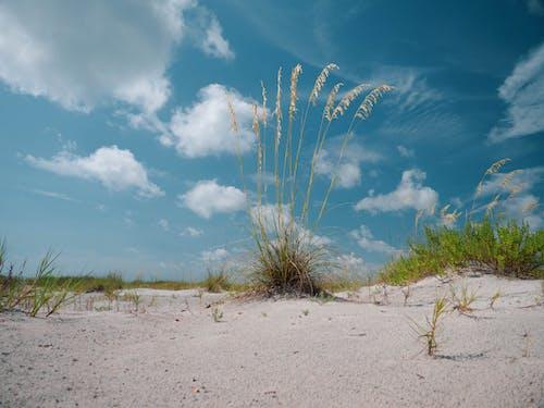 沙丘, 海灘 的 免费素材照片