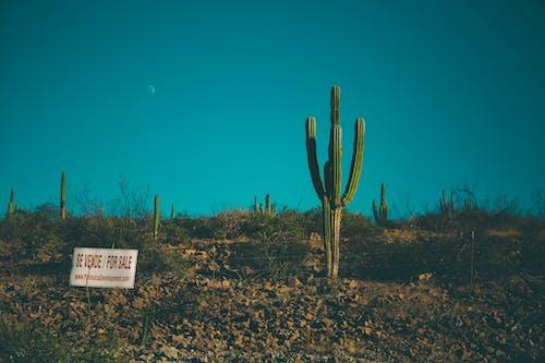 Photos gratuites de aride, baja california sur, baja californie, cactus