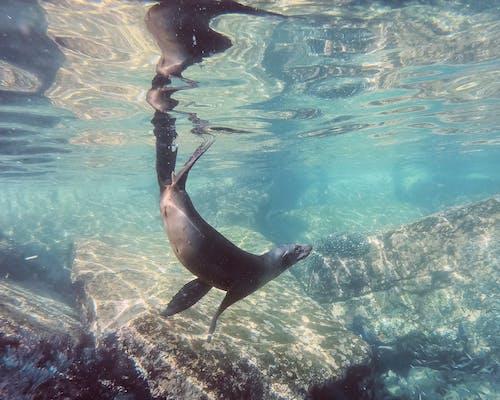 Δωρεάν στοκ φωτογραφιών με baja california, isla espiritu santo, la paz, ζώο