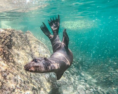 คลังภาพถ่ายฟรี ของ isla espiritu santo, ครีบ, ชีวิตทางทะเล, ทะเล
