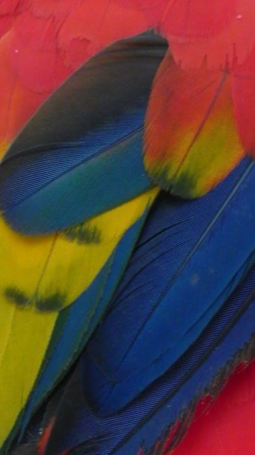 Ilmainen kuvapankkikuva tunnisteilla arapapukaija, hämmästyttävä, hauska, höyhen